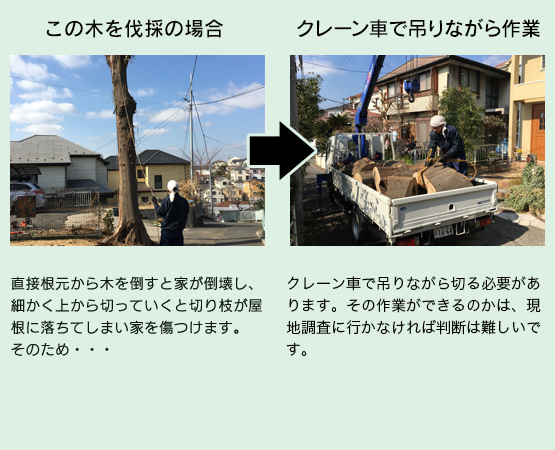 この木を伐採の場合クレーン車で吊りながら作業